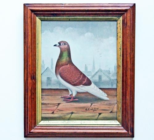 Show pigeon portrait by Embleton