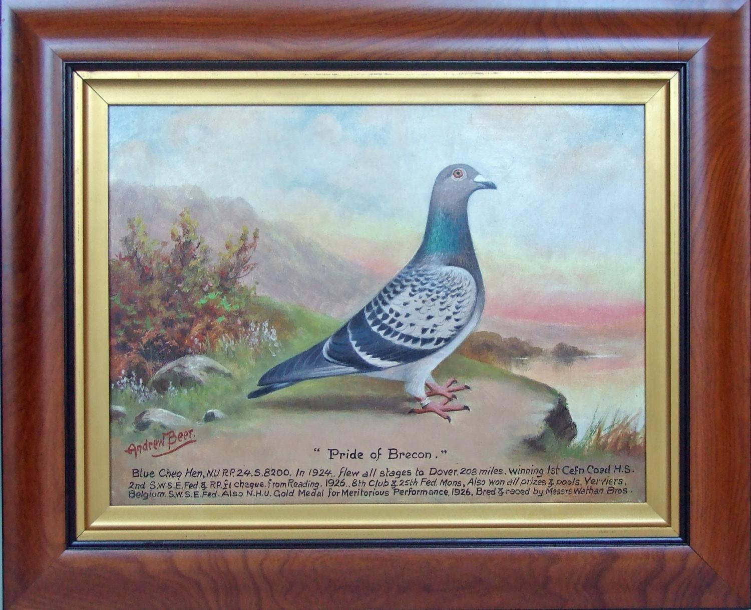 Oil pigeon portrait by Andrew Beer