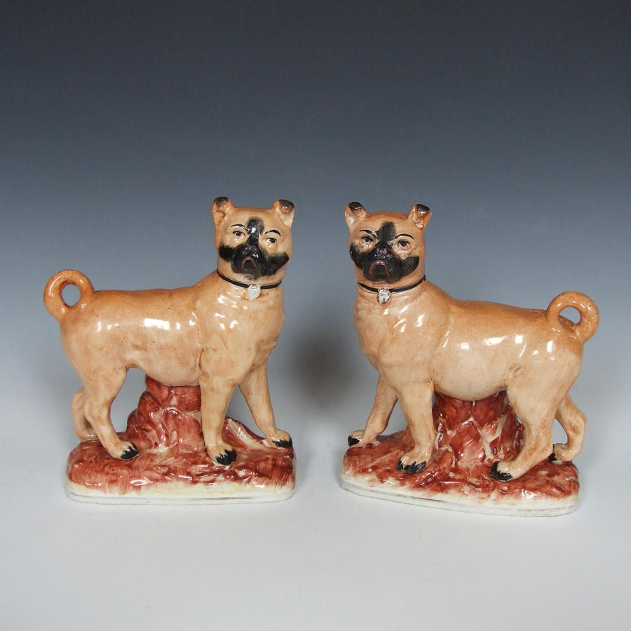 Rare pair of Staffordshire standing pugs