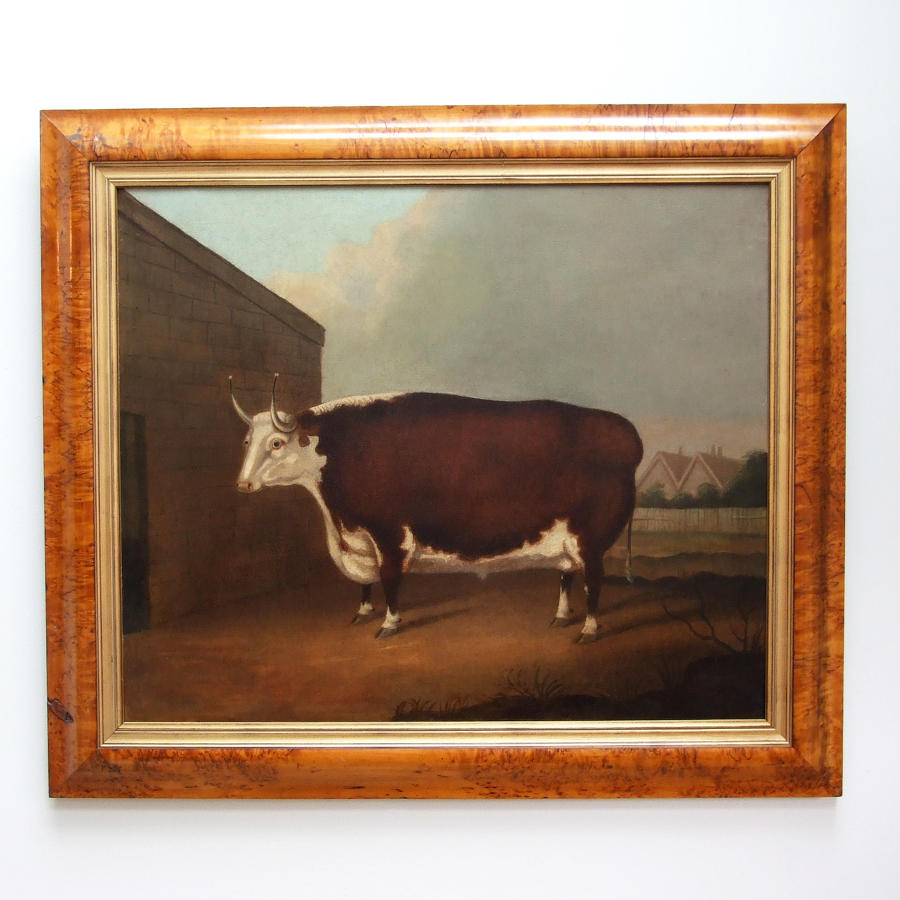 Early 19thC naive school oil painting of prize bull